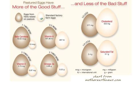 egggraphic