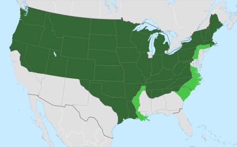 amerikaner-free-state